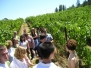 Wine Country 2005