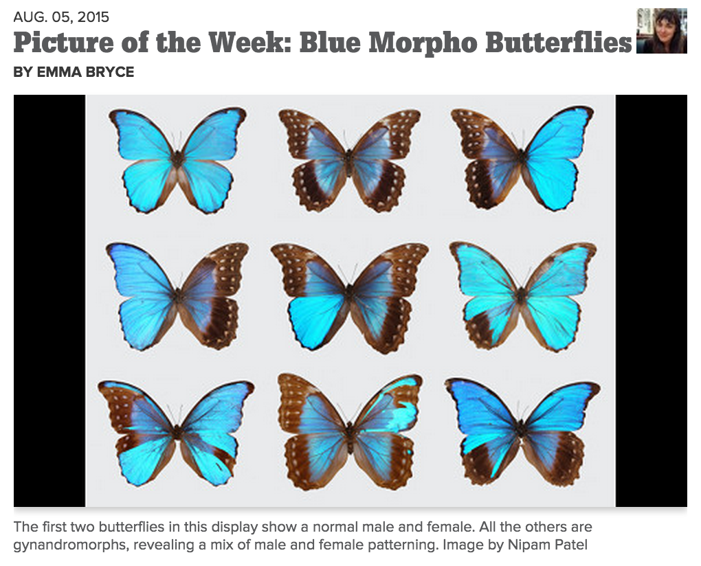 BlueMorpho-ScienceFriday